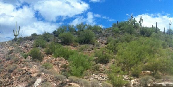 miles-of-cactus